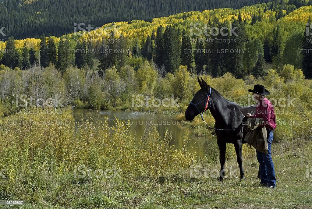 Autumn colors in Colorado royalty-free stock photo