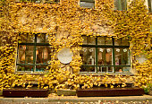 Berlin, Germany - November 10, 2018. Autumn colors in court IV of Hackesche Hofe courtyard complex in Berlin, with building wall covered with yellow tree leaves, and commercial properties.
