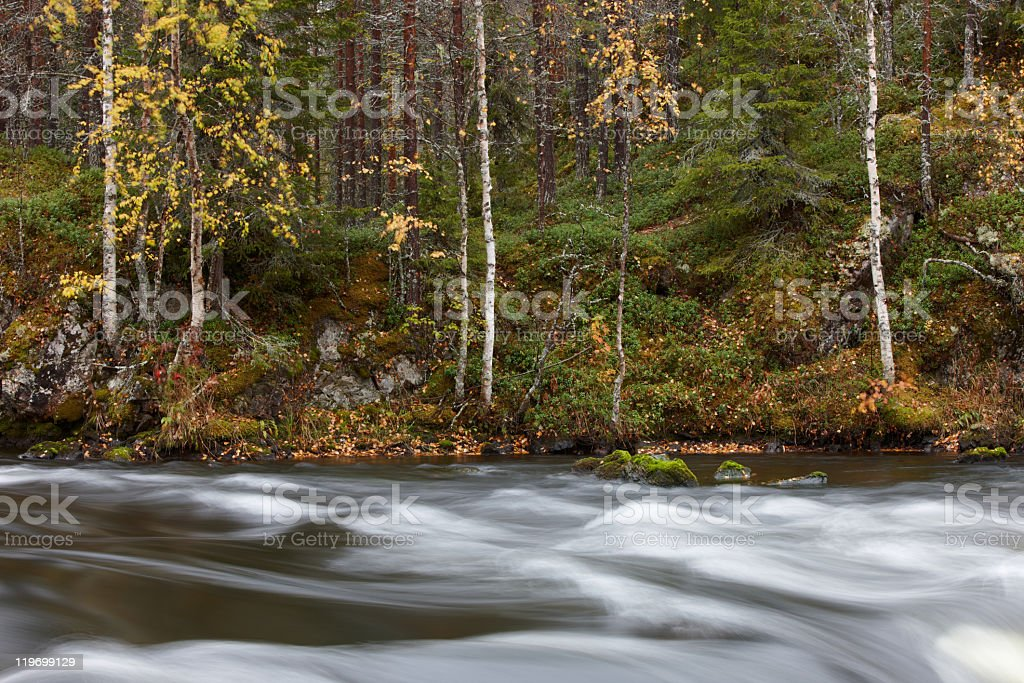 Autumn Colors in forest royalty-free stock photo