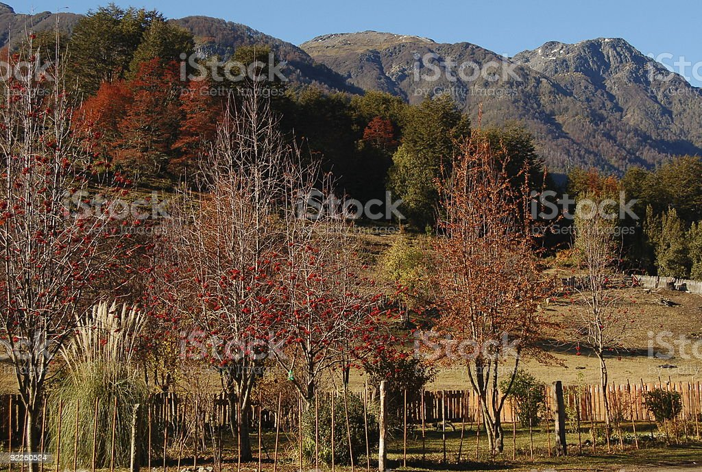 Autumn colors in Lake District Patagonia stock photo