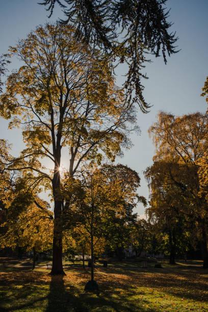 Autumn colors in Oslo stock photo