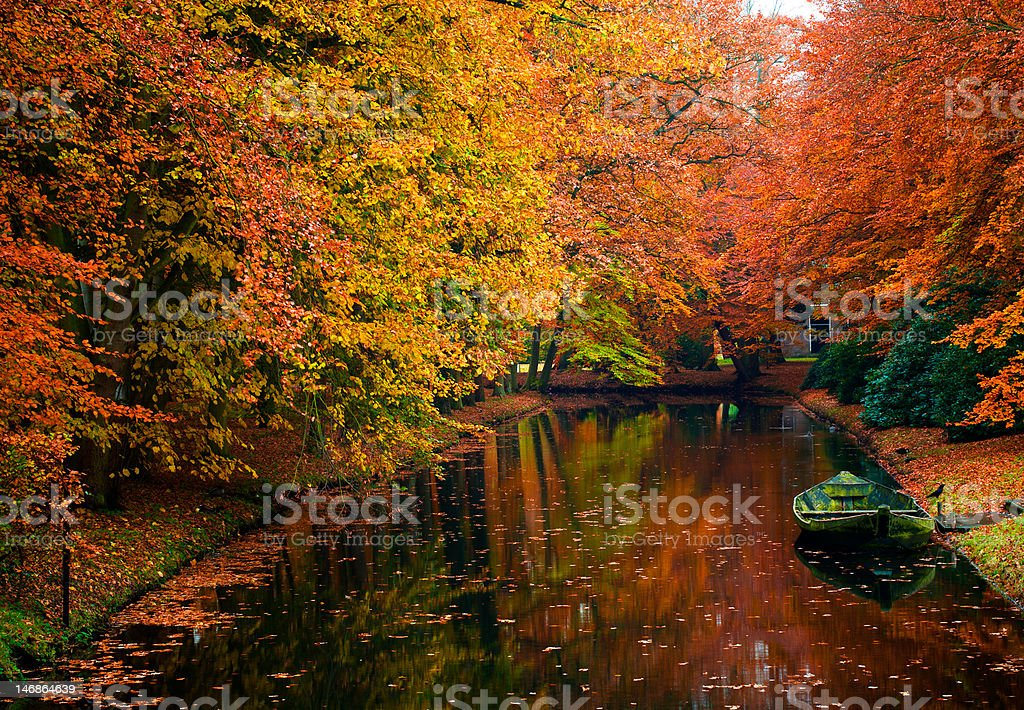 autumn colors in the forest royalty-free stock photo