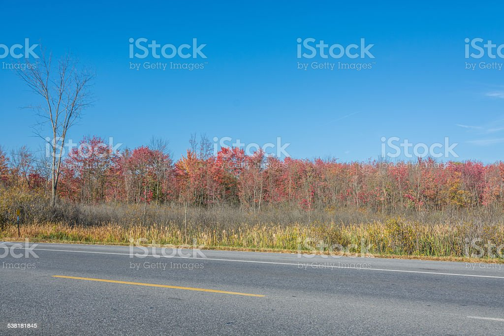 Autumn Colors In The Marsh stock photo