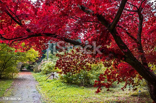 autumn trees alley with colorful leaves in the park