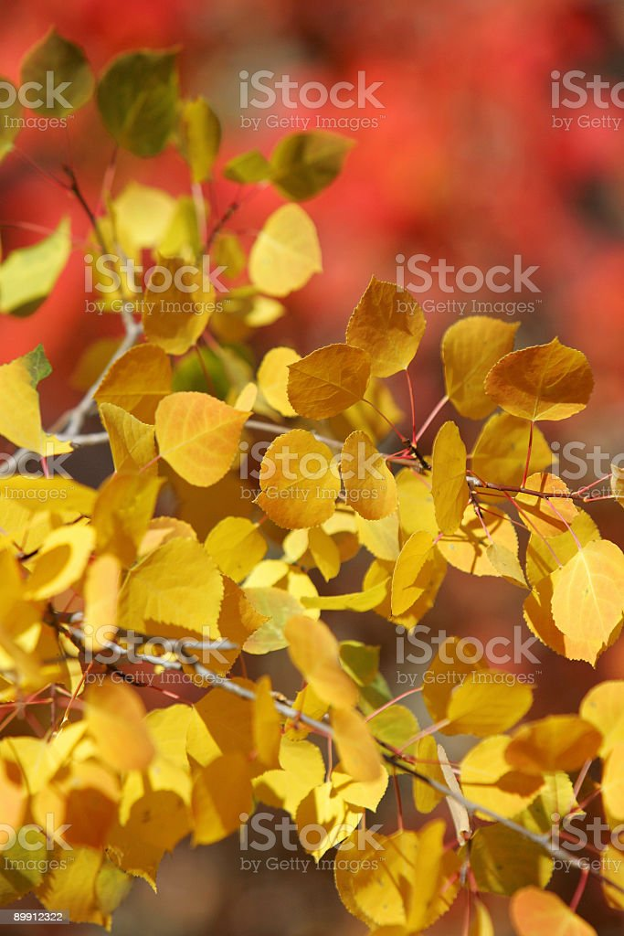 Autumn Colors in the Rockies royalty-free stock photo