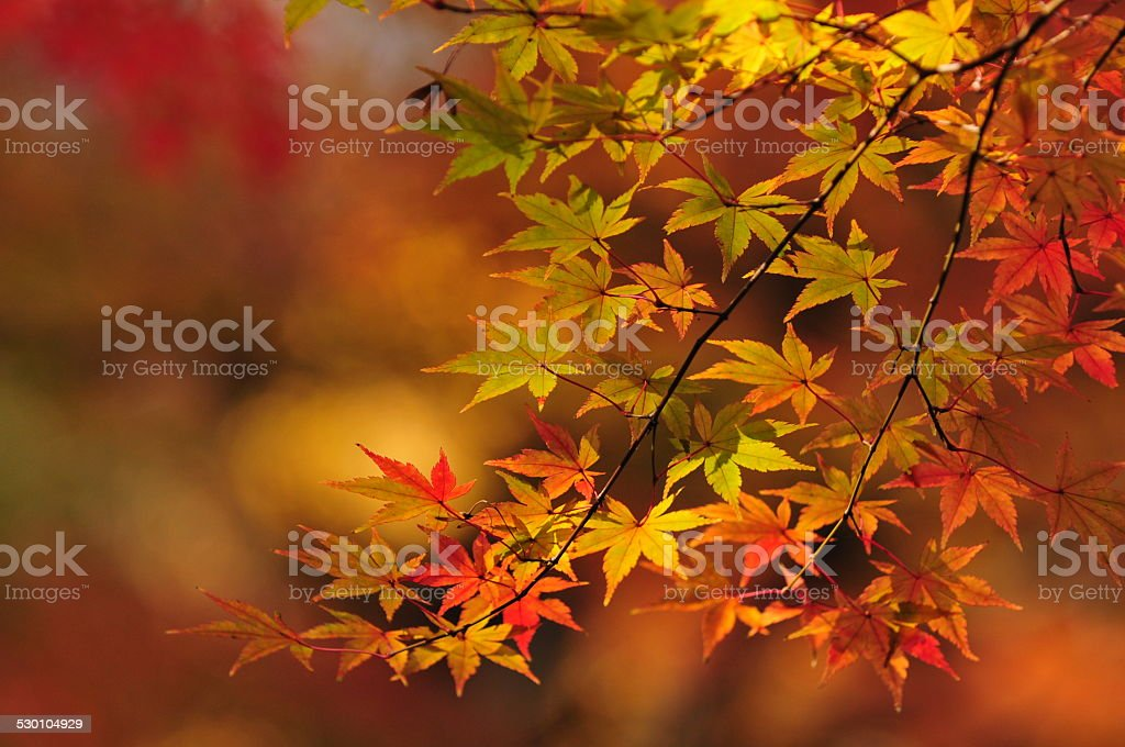 Autumn Colors in Tokyo stock photo
