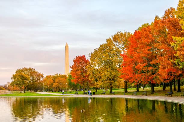 Autumn Colors in Washington D.C. Fall colors brighten the shoreline of a pond reflecting them and the Washington Monument in Washington D.C. washington dc stock pictures, royalty-free photos & images