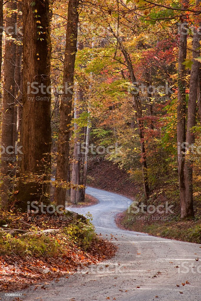 Autumn colors line a gravel road royalty-free stock photo