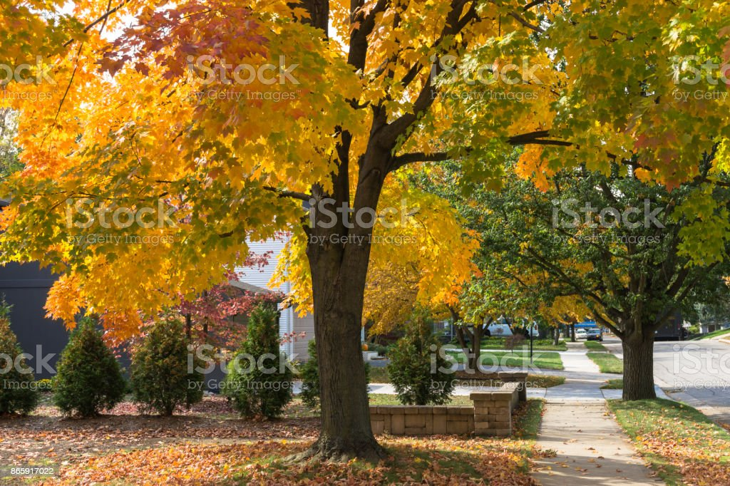 Autumn Colors Michigan stock photo