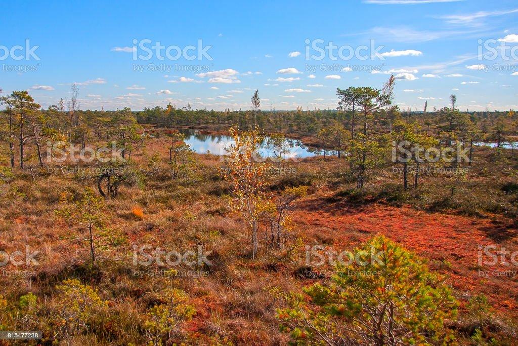 Autumn colors mire landscapes stock photo
