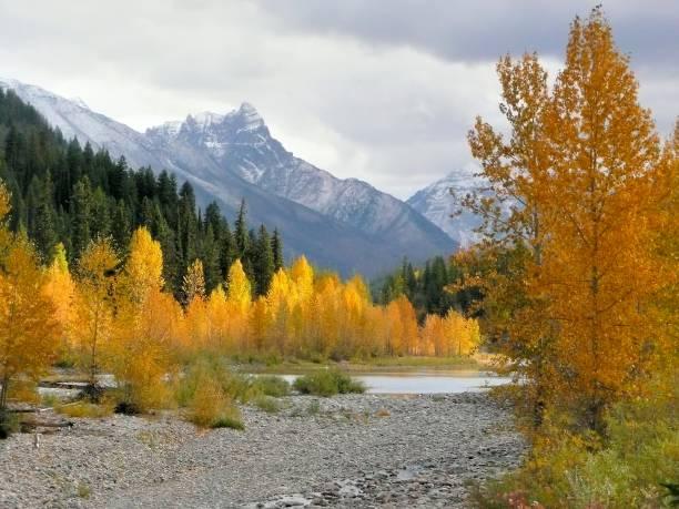 Autumn Colors near Glacier park stock photo