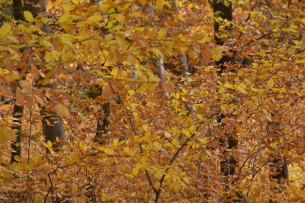 höstfärger på skogen i närbild - bernkastel kues höst bildbanksfoton och bilder