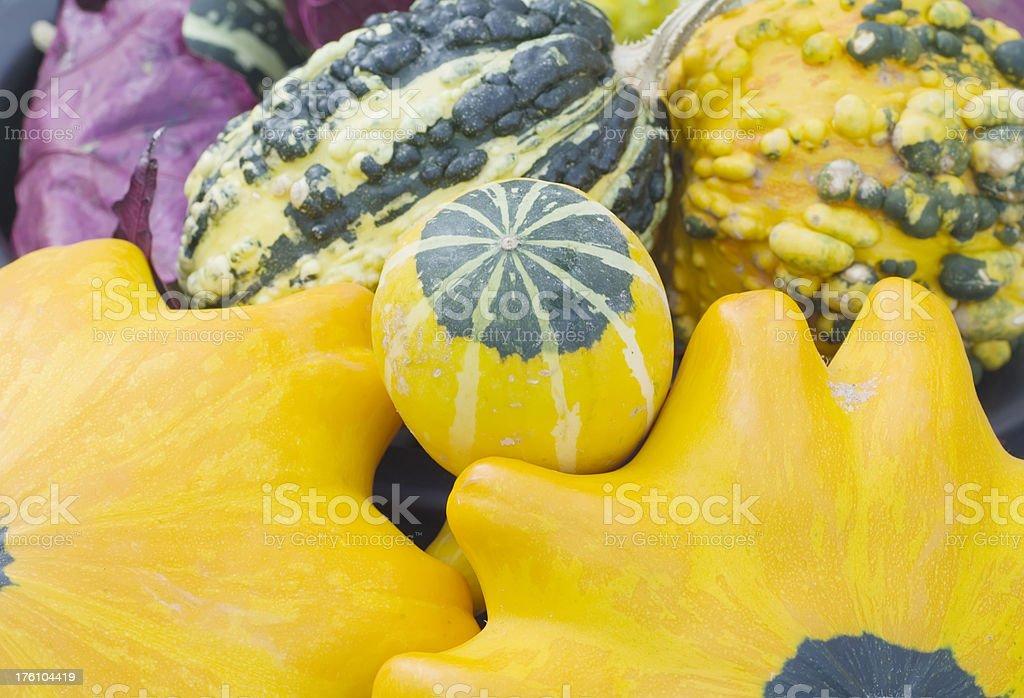 Autumn Colors: Ornamental Pumpkins & Gourds foto