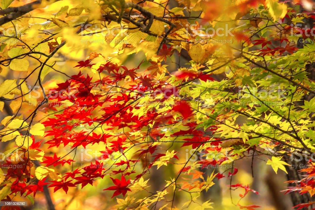 秋の色 ストックフォト