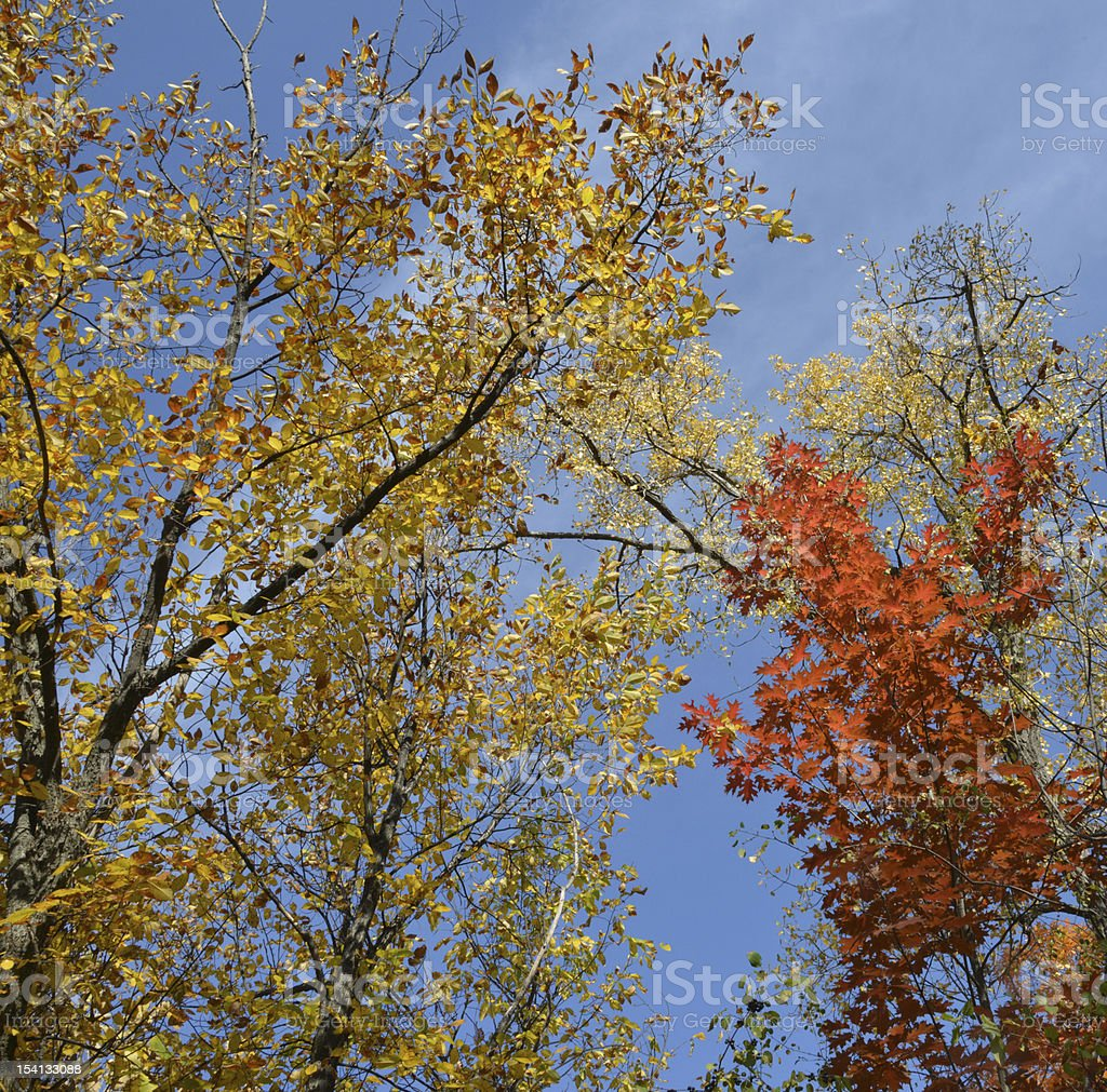 Autumn Colors royalty-free stock photo