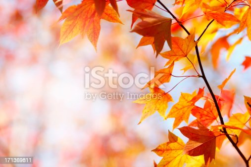 Autumn leaves in the forest.