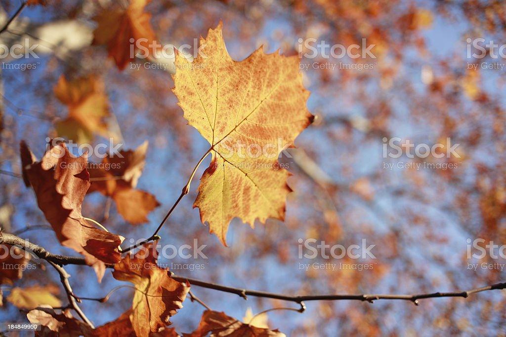 Herbstliche Farben – Foto