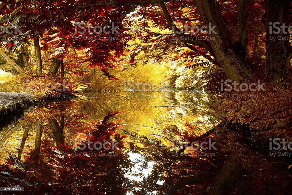 Couleurs de l'automne - Photo