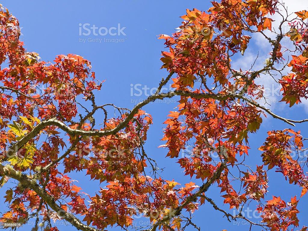 Colores otoñales foto de stock libre de derechos
