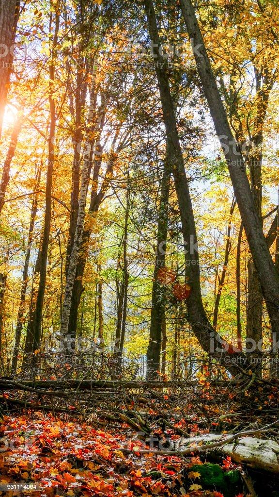 Sonbahar renkleri - Royalty-free Akçaağaç Ağacı Stok görsel