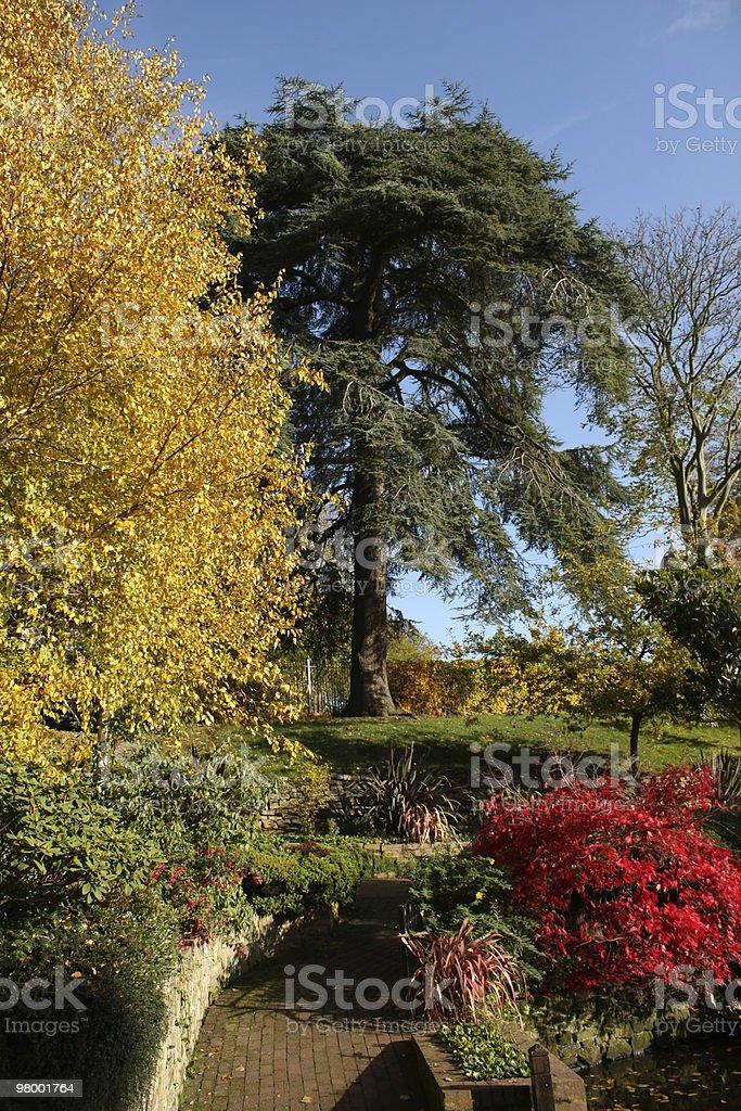 Autumn Colors royalty free stockfoto