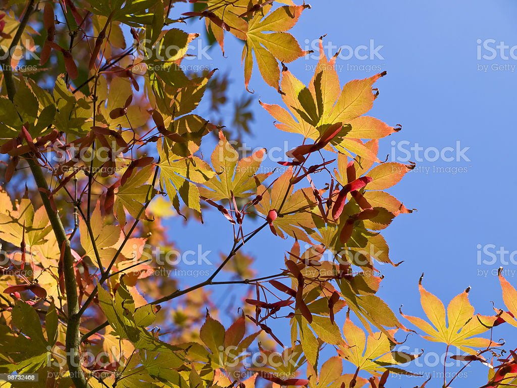 Colori autunnali foto stock royalty-free
