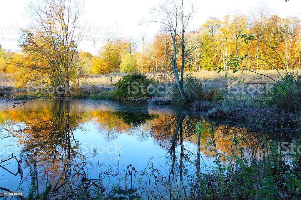 Autumn colors reflecting in the lake foto stock royalty-free