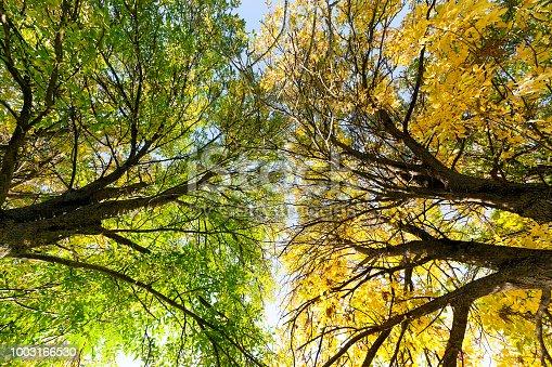 istock autumn colors tree 1003166530