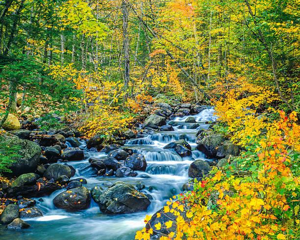 herbstfarben underhill state park green mountains, vt - bach stock-fotos und bilder