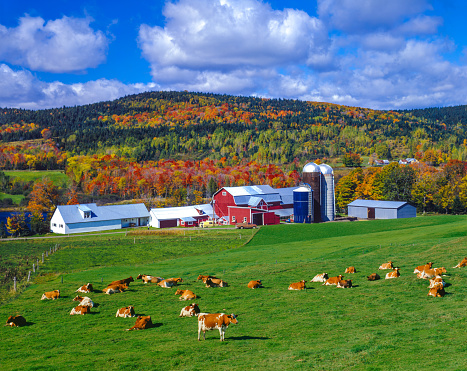 istock Autumn colors with farm in the Green Mountains, VT 488912426