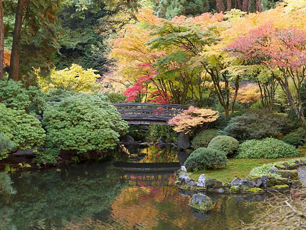 herbst farben mit teich fußgängerbrücke japanischen garten in portland, oregon - japanischer garten stock-fotos und bilder