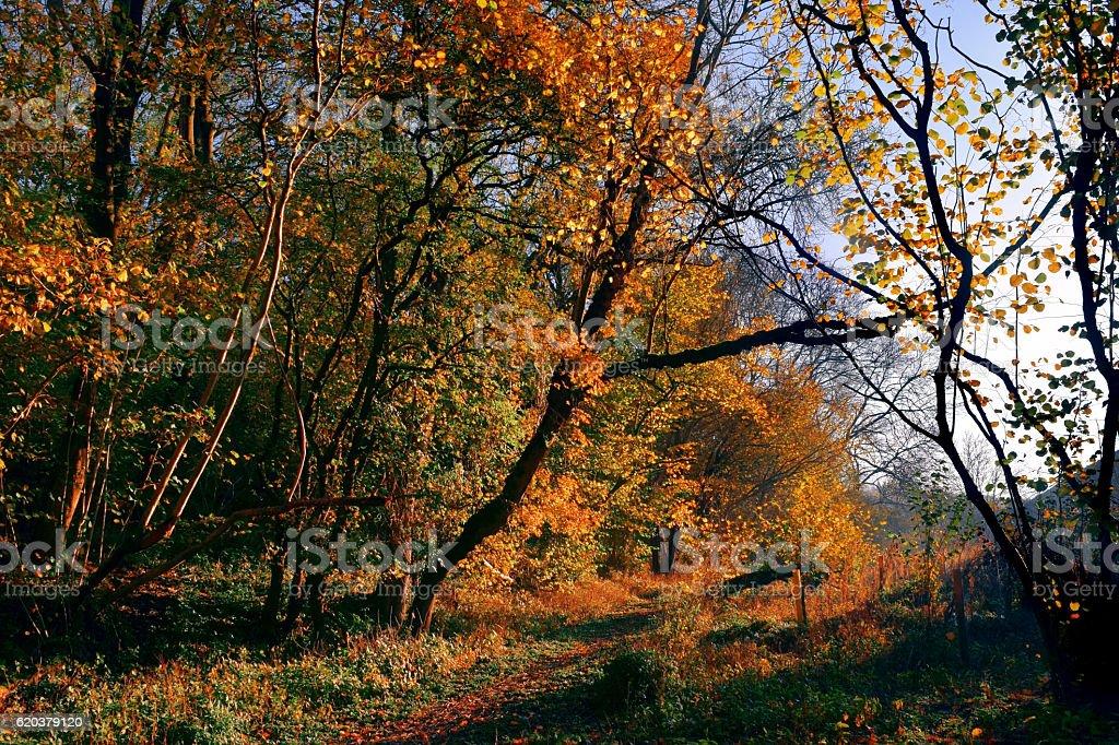 Autumn Colour and Light zbiór zdjęć royalty-free