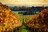 Wine growing in nature