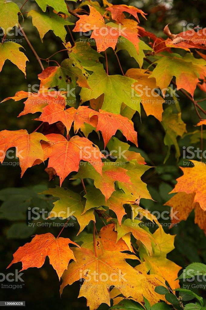 Autumn Colour royalty-free stock photo