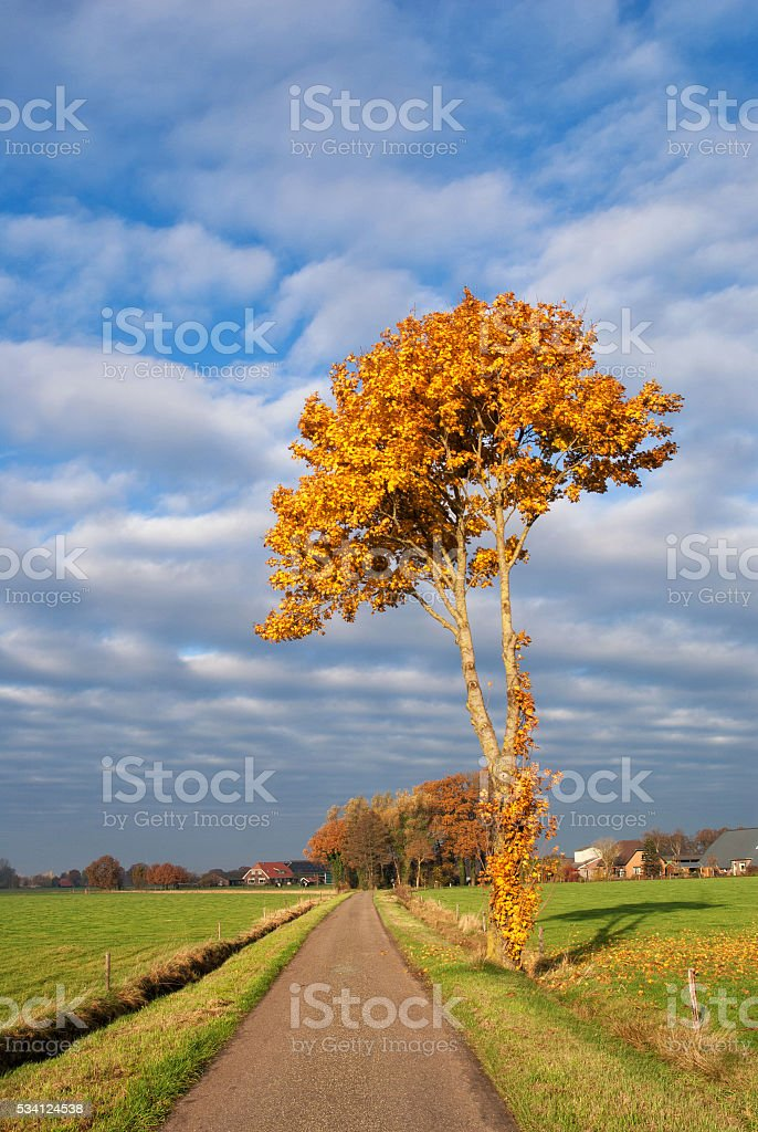 Autumn coloured tree stock photo