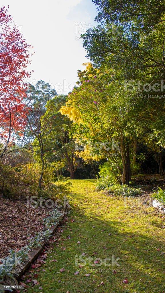 Cores de outono em uma terra de parque ao ar livre - Foto de stock de Austrália royalty-free