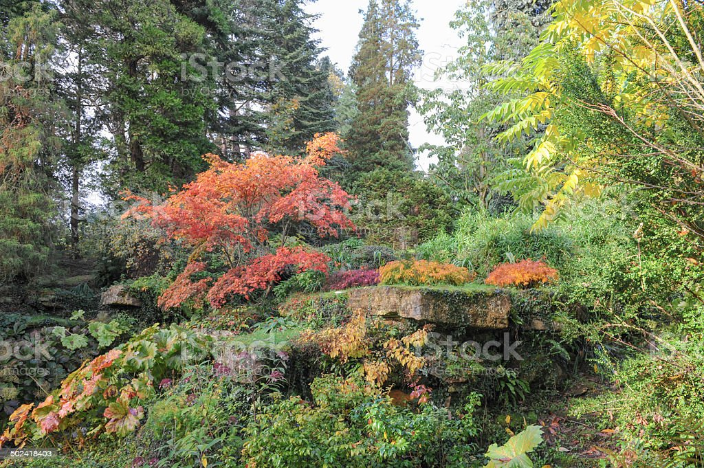 Autumn Colours in Batsford Arboretum and Botanical Gardens in Gloucestershire stock photo