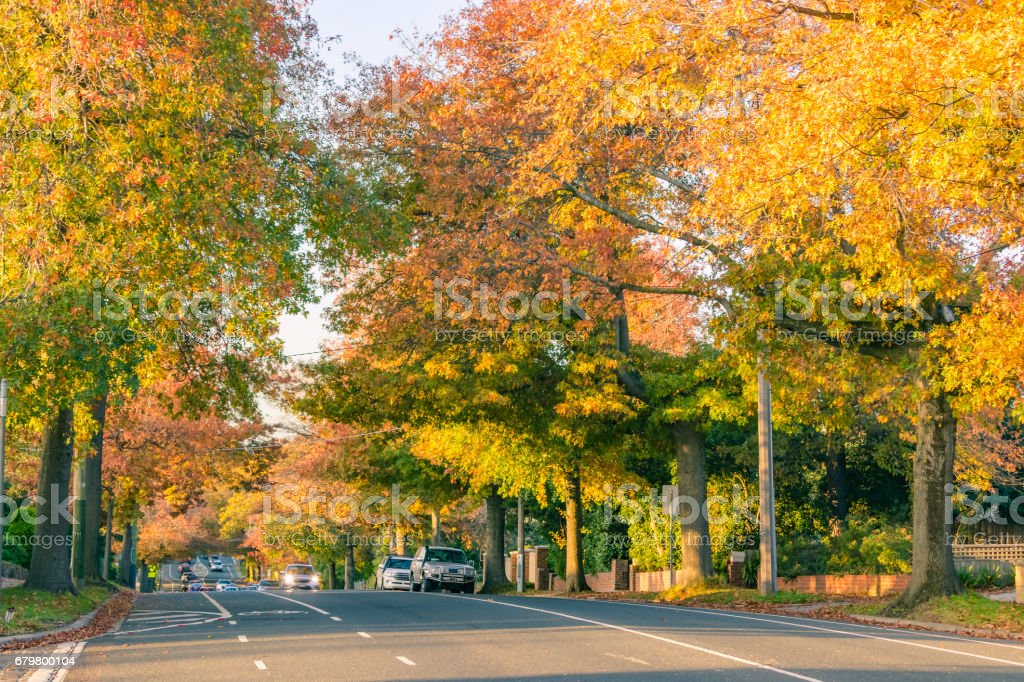 Autumn colours in leafy suburban street with cars in distance. stock photo