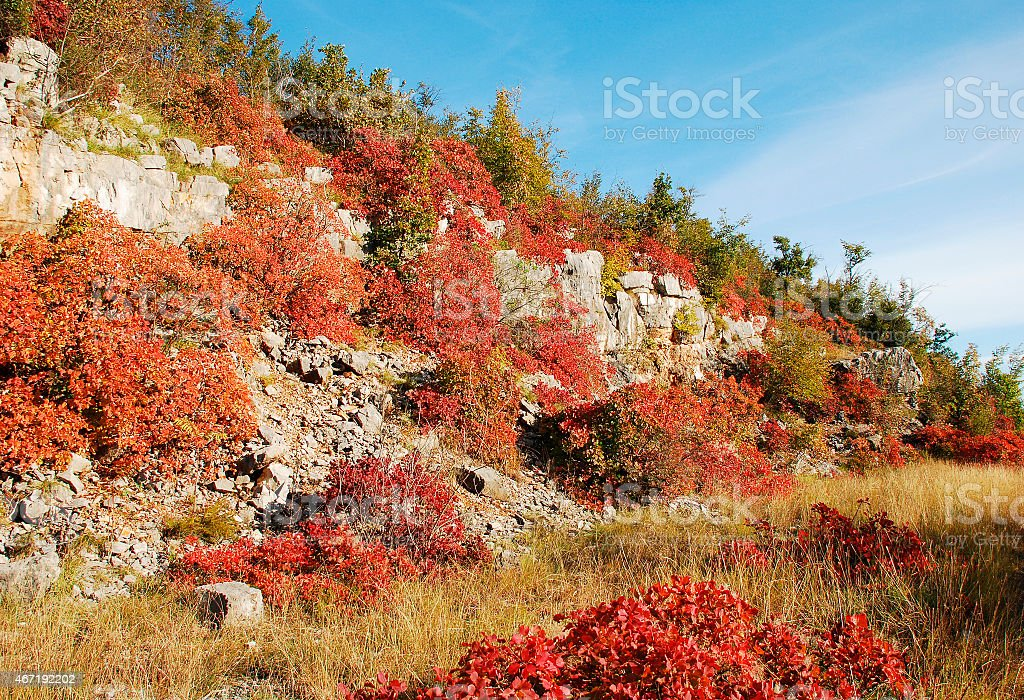 Autumn Colours in the Carso stock photo