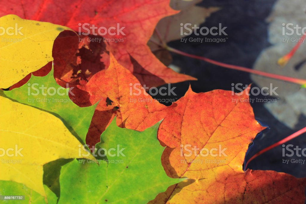 autumn colours in the fallen leaves stock photo