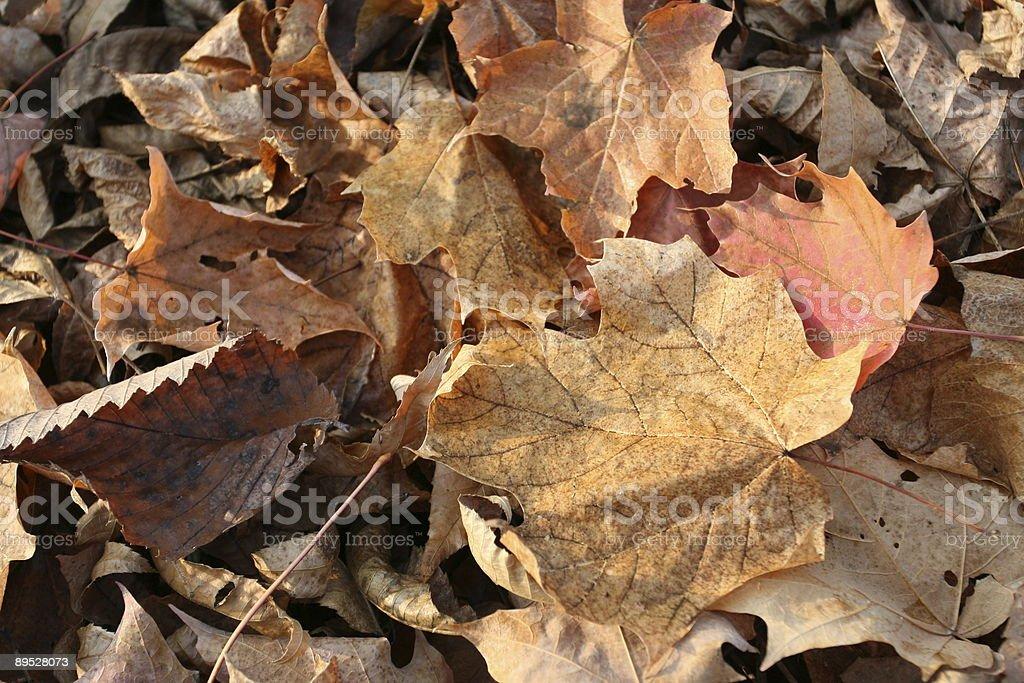 Colores de otoño hojas de fondo, Mont-Tremblant, Quebec, Canadá foto de stock libre de derechos