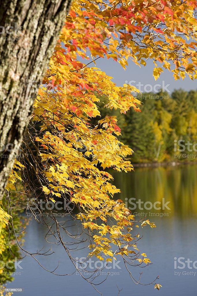 Autumn colours on the Lake stock photo