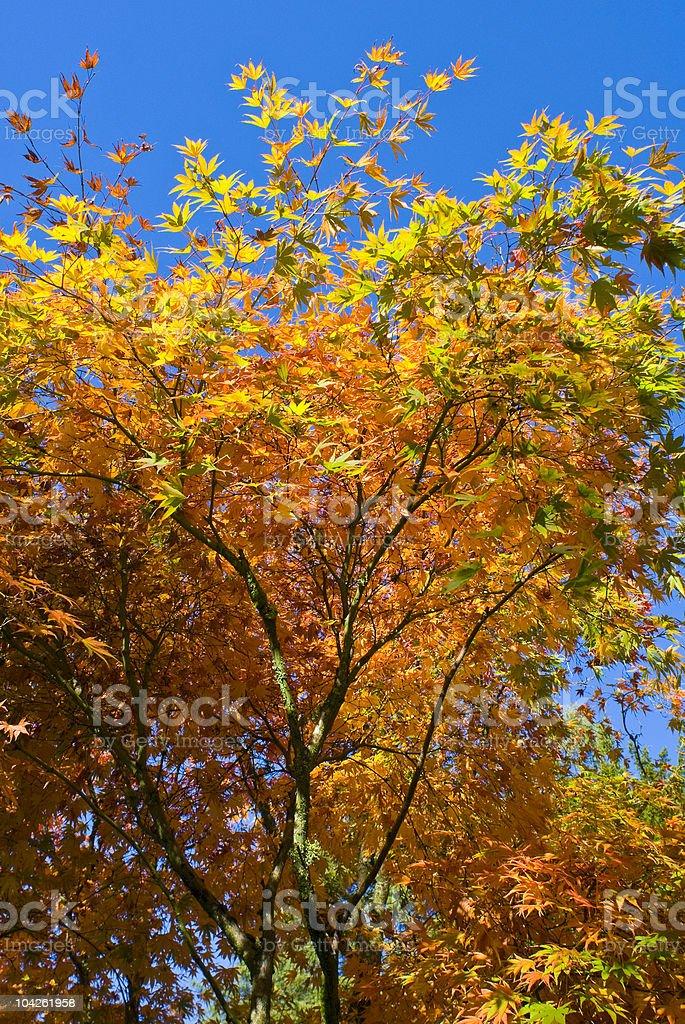 Autumn colours royalty-free stock photo