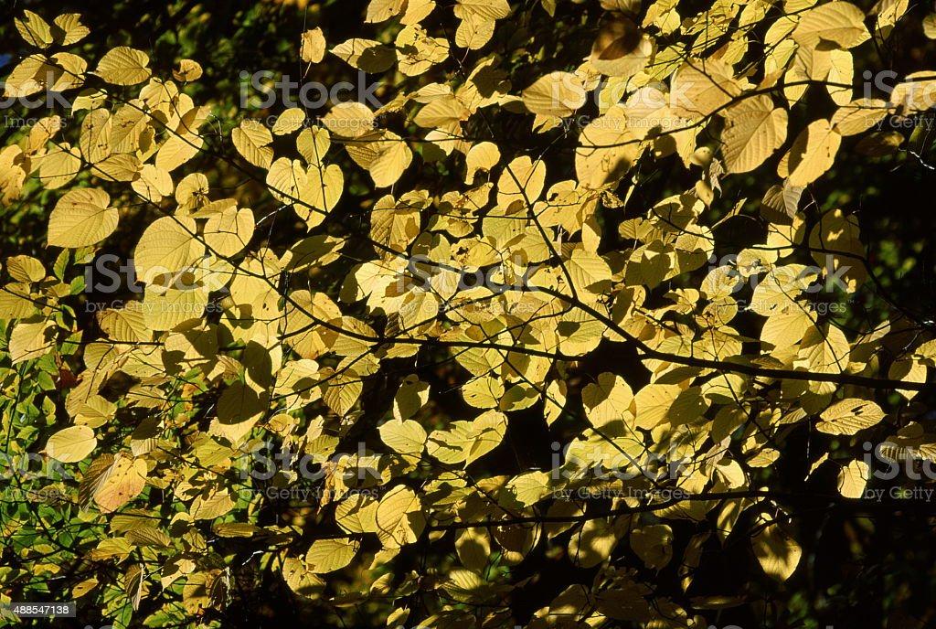 秋の色 ロイヤリティフリーストックフォト