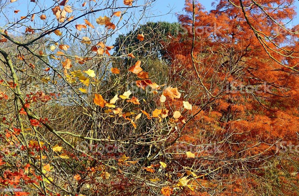 Jesień kolory  zbiór zdjęć royalty-free