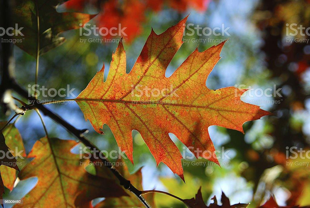 Autumn colours. royalty-free stock photo
