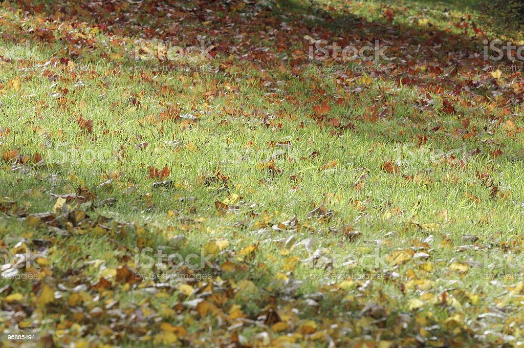 Herbstlicher Farben. Lizenzfreies stock-foto