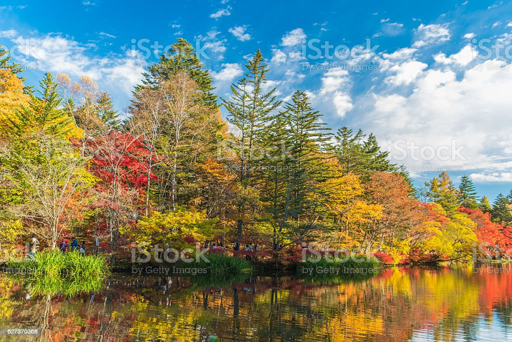 Autumn colours pond stock photo