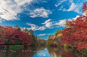 秋の色合いの池