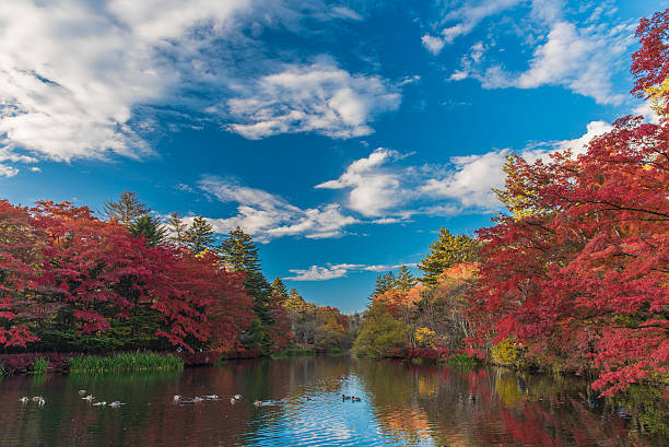Outono cores pond - foto de acervo